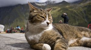 19 Ridiculously Photogenic Adventure Cats Exploring the Great Outdoors #adventurecats expl...
