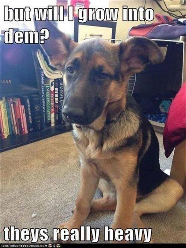 Dump A Day Beware Of Animals With Funny Captions – 30 Pics