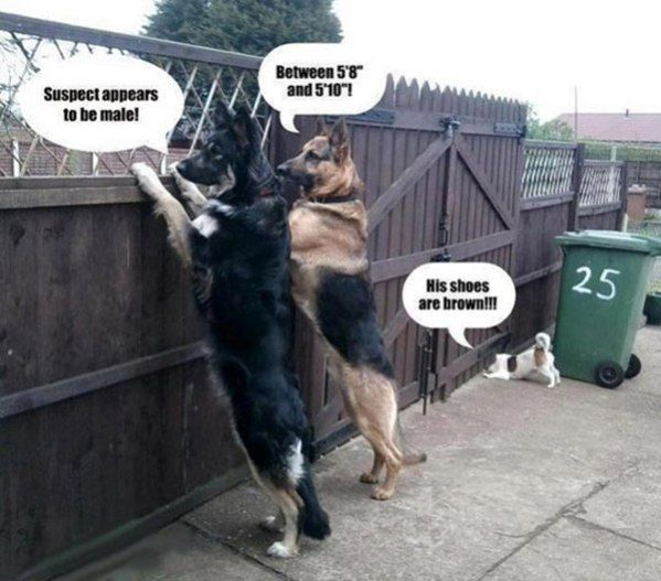 Police Dogs – funny pictures – funny photos – funny images – funny...