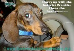 Funny Dachshund Pictures with Captions | April 2011 on our FaceBook page