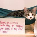 Cat Shaming!! Do you have any cat shaming photos?! We'd love to see them…