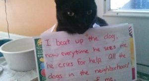 "#Cat explore Pinterest""> #Cat #humor explore Pinterest""> #humor #fun explore P..."