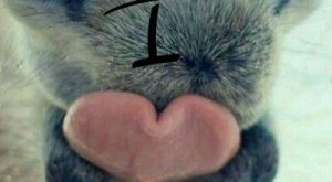 Created by Lauren Denard. horse nose and tongue shaped like heart. Love the fuzzy…