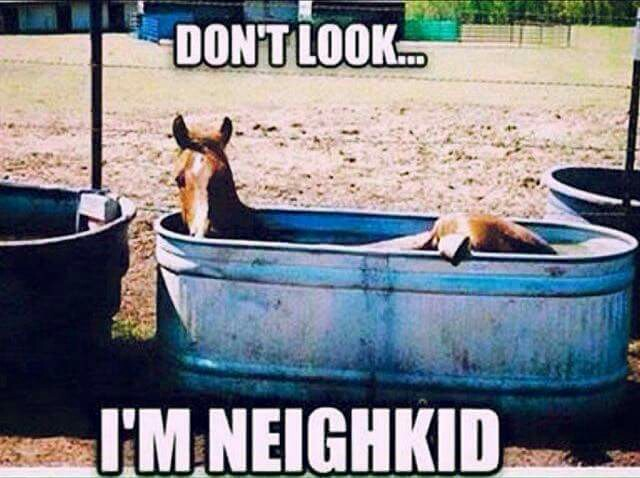 "Horse humor quote, ""Don't look, I'm neigh kid"". Funny horse laying..."