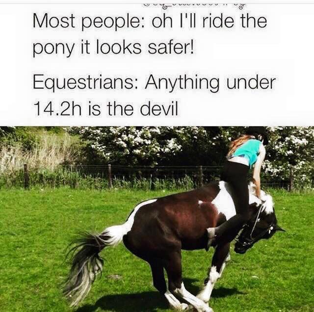 Most people: Oh I'll ride the pony it looks safer! Equestrians: Anything under is…...