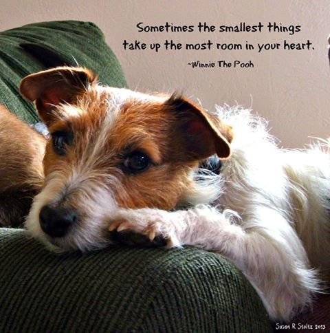 """""""Sometimes the Smallest Things take up the Most Room in your Heart"""" …&#8..."""