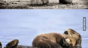 AWESOME if you love animals check this out!! Animal parenthood = cuteness overload