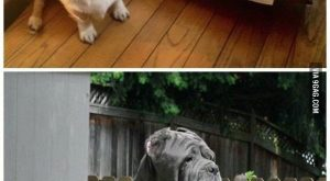 I think some of these dogs had to many pups! Some of them might…