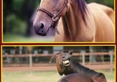 funny horse memes – Google Search
