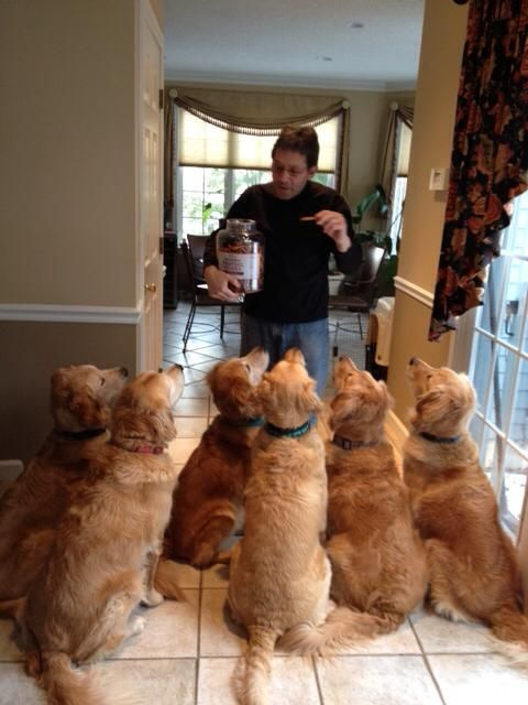 i want this many puppies!