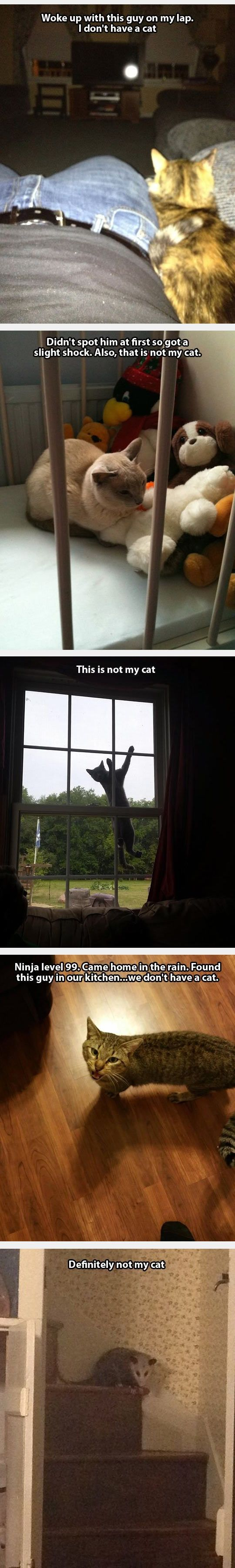 Not my cat!!