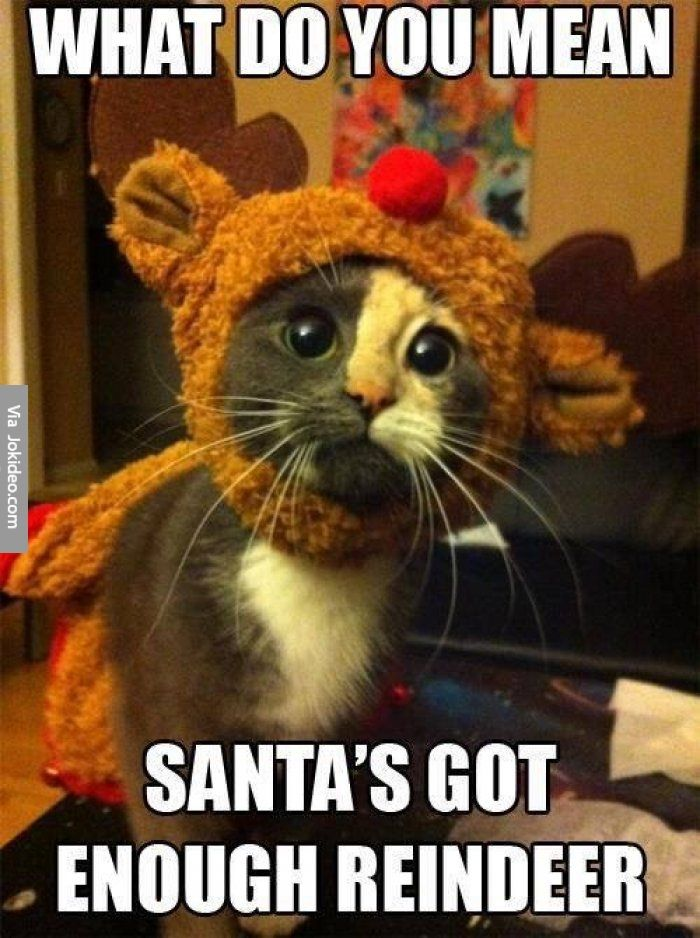 Don't normally pin animals pics, but it's a kitten in a Christmas sweater. Des...