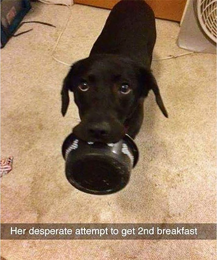 60 Today's Most Funny Memes ( #279)