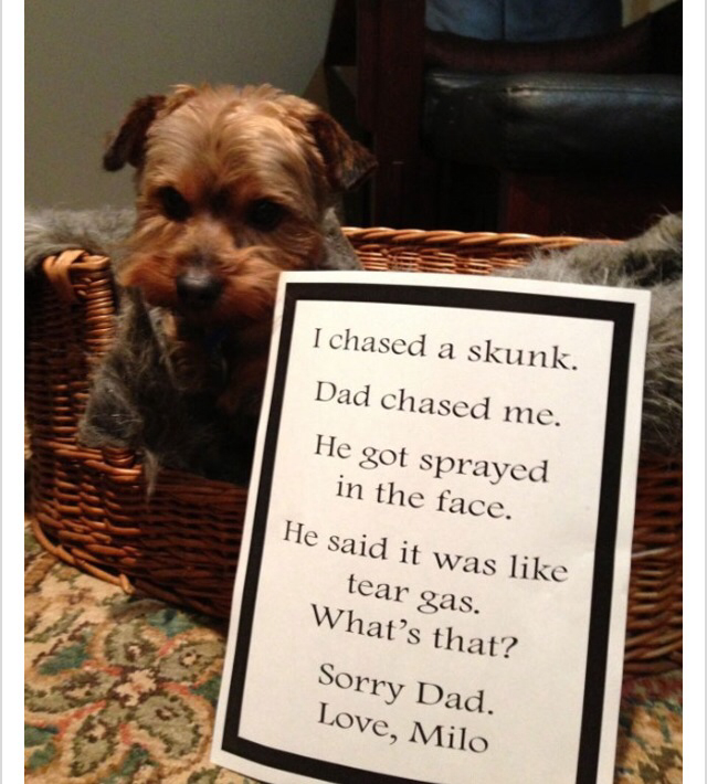 "Dog shaming #dogs explore Pinterest""> #dogs #dogshamming search Pinterest""> #d..."