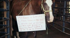 "Horse Shaming! ""I have been a bad boy& #8230;"""