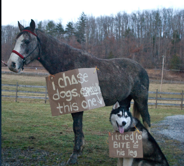11 Horses That Are Not Sorry for What They've Done – Horse Shaming -…