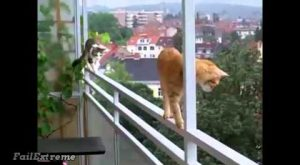 Stupid Cats Fails