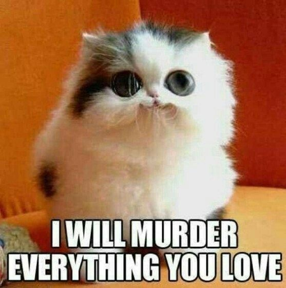 Funny Memes Murder Your Love – ExplorePic