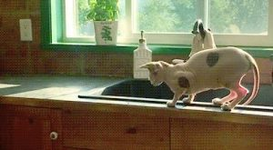 Naked Cat Fail