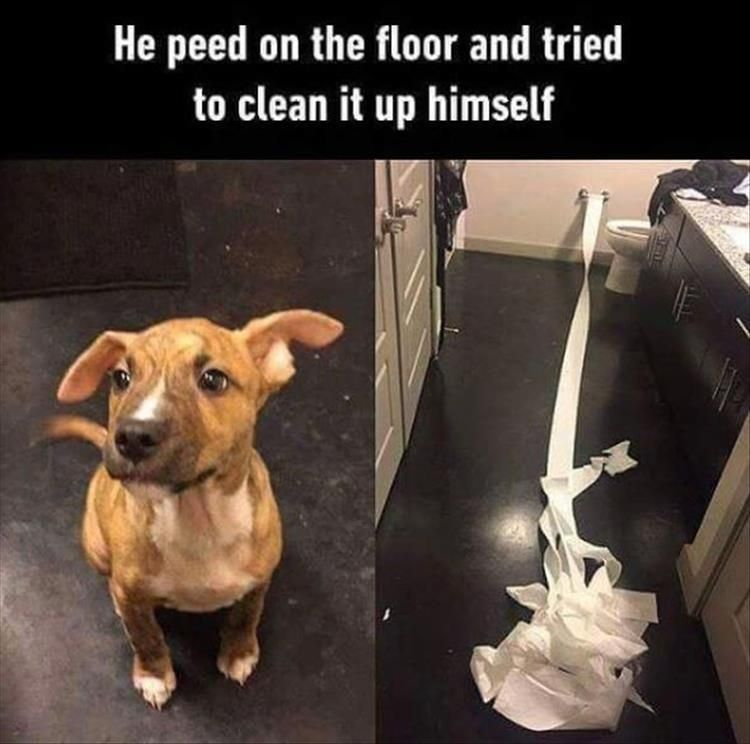 "5 Funny Animal Pictures Of Today – #funnymemes explore Pinterest""> #funnymemes..."