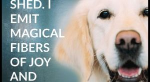 Magical Fibers that roll across my floor like a tumbleweed. #DogQuotes explore Pinterest&#...