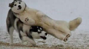 Funny Dog Fails – Here are some great dog fail pics of our furry…