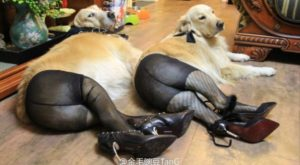 Rosie, who let society's pressures get to her. | 31 Biggest Dog Fails Of…