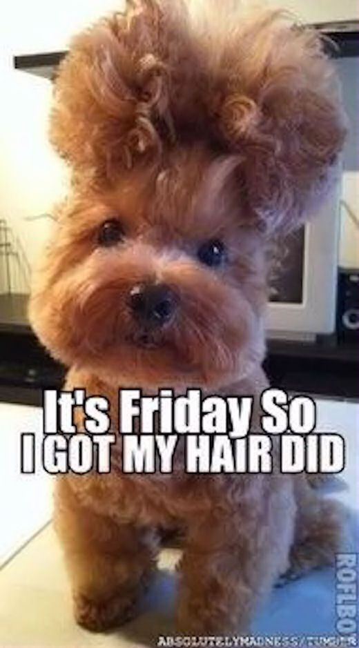 Its Friday So I Got My Hair Did friday happy friday tgif friday quotes…