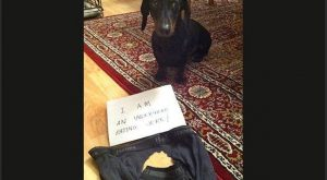 The best of dog shaming!: Funny Animals, Dog Shame, Dog Shaming, Animal Shame, Bad…
