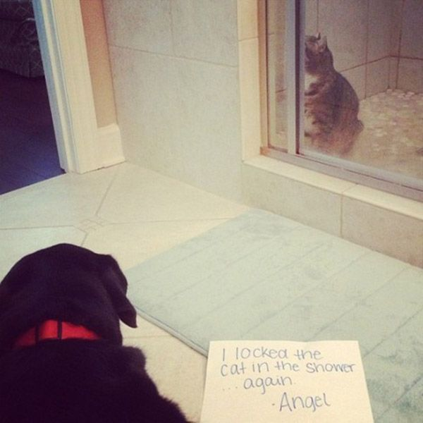 The 27 Naughtiest Dogs In The World (Hilarious Dog Shaming Gallery)