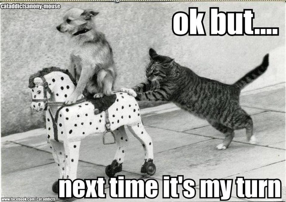Funny Pictures with Captions | cat pushing dog on toy horse Funny dog photo…