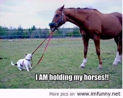 horse pictures with captions | hold it funny horse pictures with captions