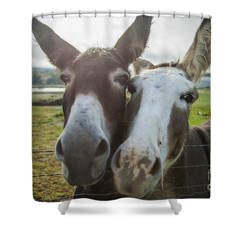 Animal Personalities Funny Donkeys Besties Ham It Up For Camera – Shower Curtain