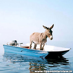 Funny Donkey Pictures, Funny Donkeys Images, Funniest Donkey Pictures, Donkeys picks | Tip...