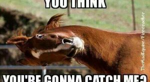 "Catch me if you can! #horseproblems search Pinterest""> #horseproblems"