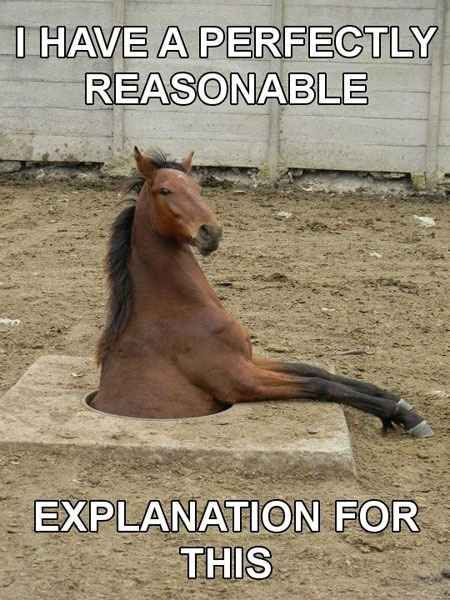 "#ArabianHorses search Pinterest""> #ArabianHorses #Humor explore Pinterest""&..."