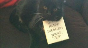 just laughed out loud inappropriately at work — Cat-Shaming At Its Best