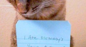 You will never cat shame them | 17 Signs You Might Be Really Obsessed…