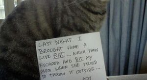 Cat Shaming | KISS