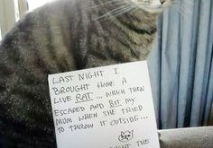Cat Shaming – ROTFL LMAO More