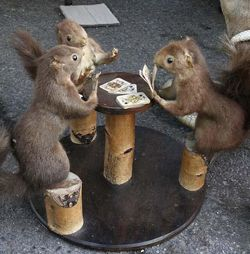 Funny+Squirrel+Playing+Cards