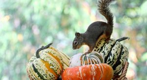 Autumn Decor, Squirrel Print, Fall Decor, Pumpkins, Squashes, Funny Squirrels, Vegetable P...
