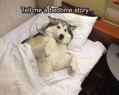 """Funny Animal Pictures Of The Day – 21 Pics #humor explore Pinterest""""> #humor #..."""
