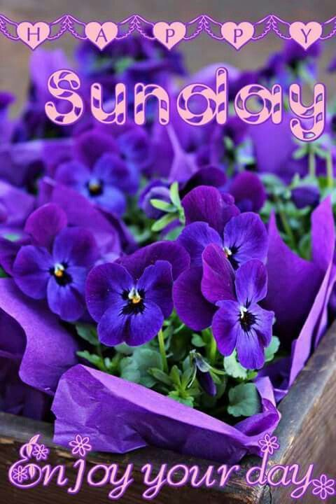 HAVE A HAPPY SUNDAY ! ENJOY YOUR DAY !