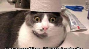 """Bichon Frise, Cat, Puppy, Funny animal, Laughter, Image, Meme, Humour: the """"have see..."""