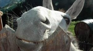 """""""And in the morning, I'm making WAFFLES!"""" Donkey"""