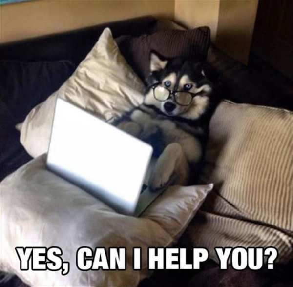 Siberian Husky, Dog Shaming, Internet meme, Meme, Puppy, YouTube Meme: YES CAN I HELP…