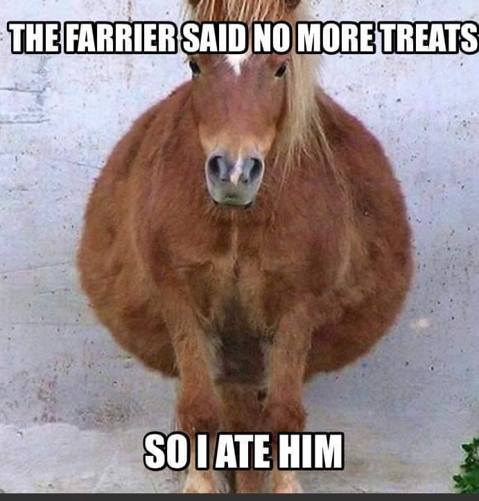 Horse humor, the farrier said n o more treats, so I ate him. Cute…