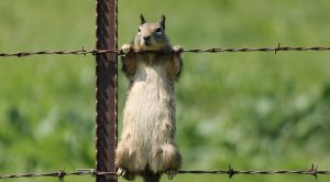 Hilarious squirrel, haha, looked like she is doing pull ups