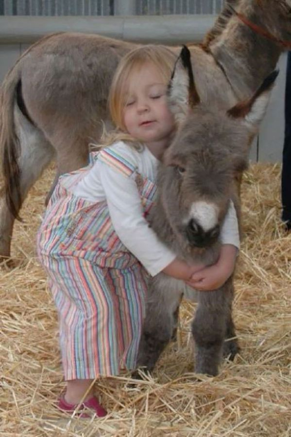 30 Cute Donkey Pictures and GIFs – Funnyfoto | Funny Pictures – Videos -…